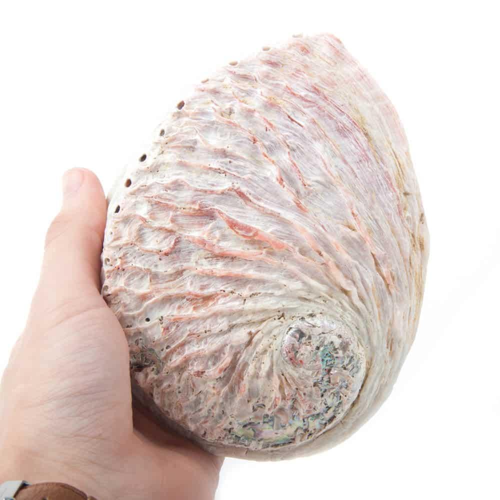 huis reinigen met salie abalone schelp