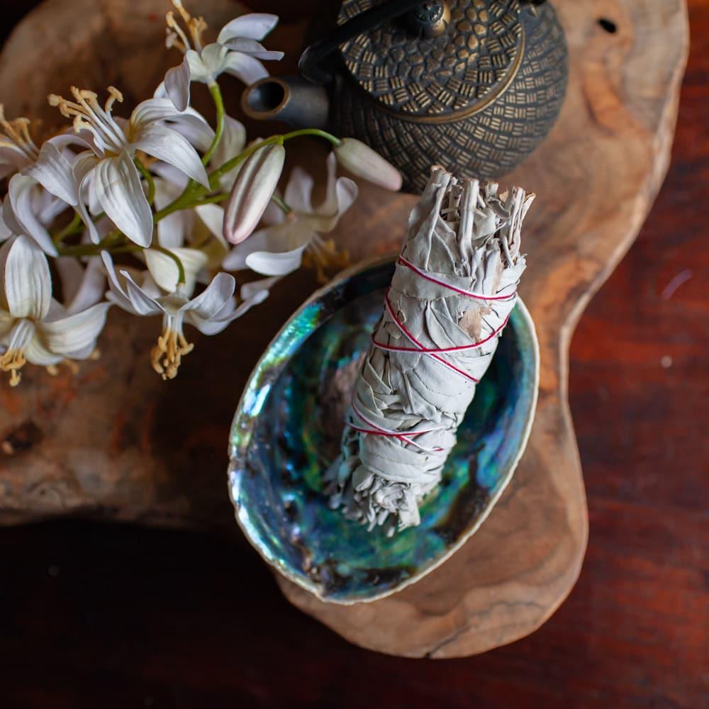 witte salie smudge medium in abalone schelp