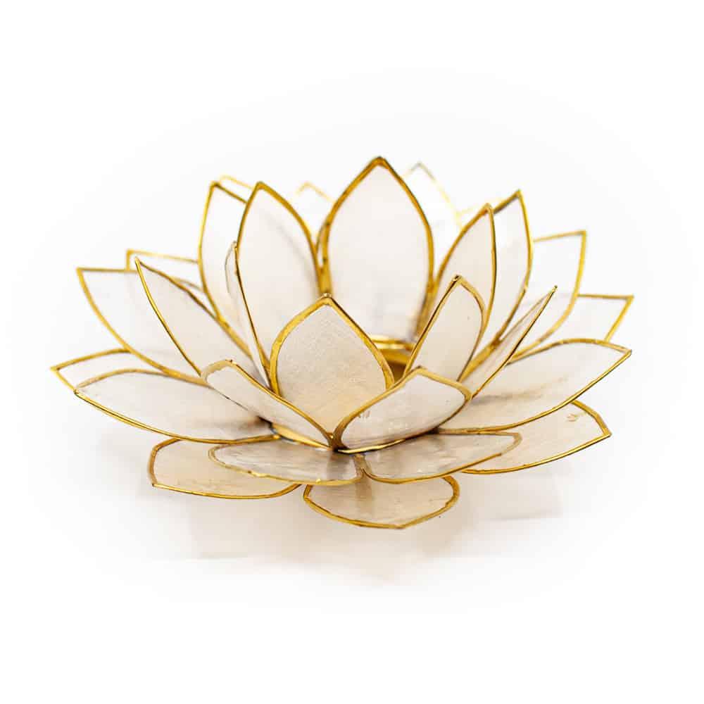 witte lotusbloem met gouden randjes