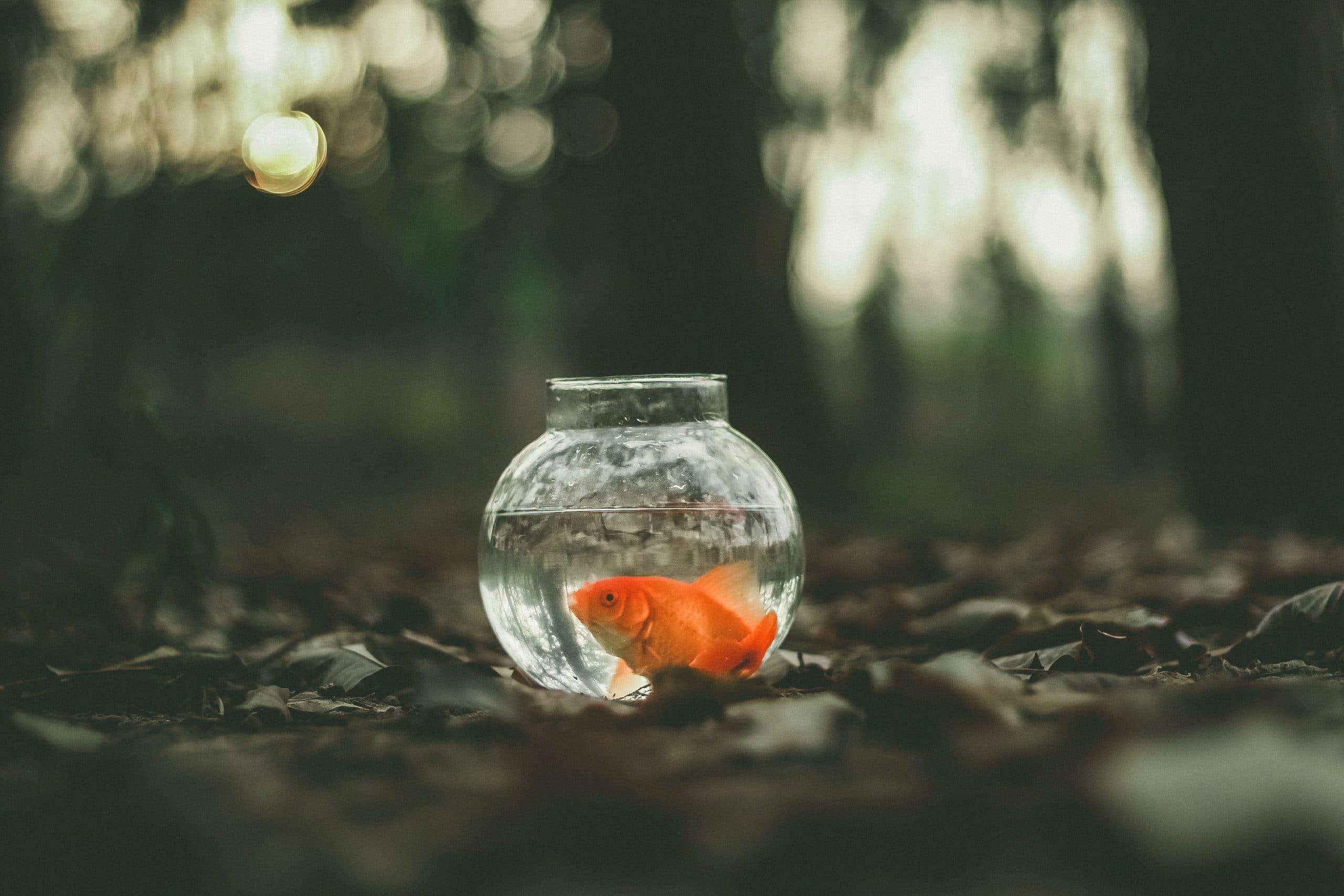 vis kleine kom grond blaadjes vissenkom goudvis