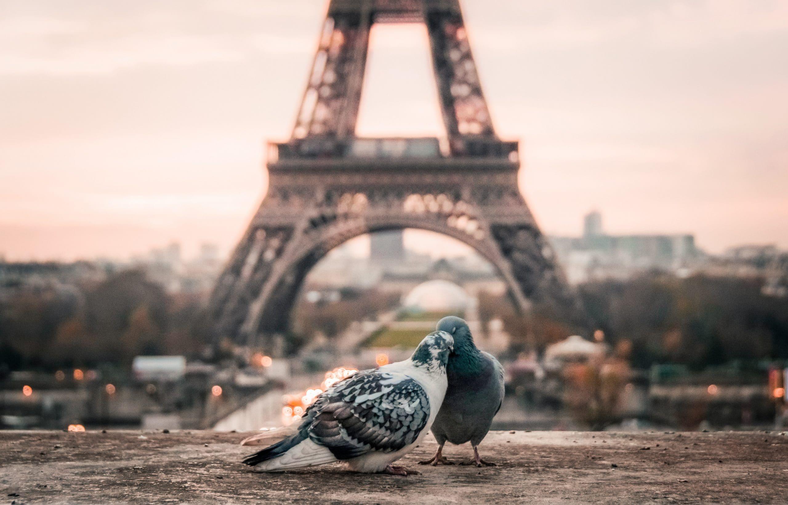 duiven bij eiffeltoren
