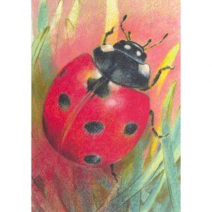Ansichtkaart Klein insectenboek 2 – Loes Botman (Set van 5)